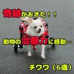 dog-miracle1