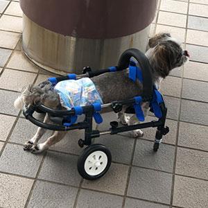 wheelchair-superiorityx6