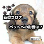 dog-covid-19