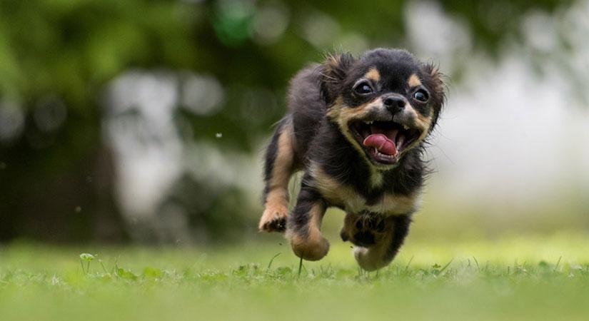 dog-covid-193
